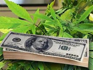 Cannabis business money